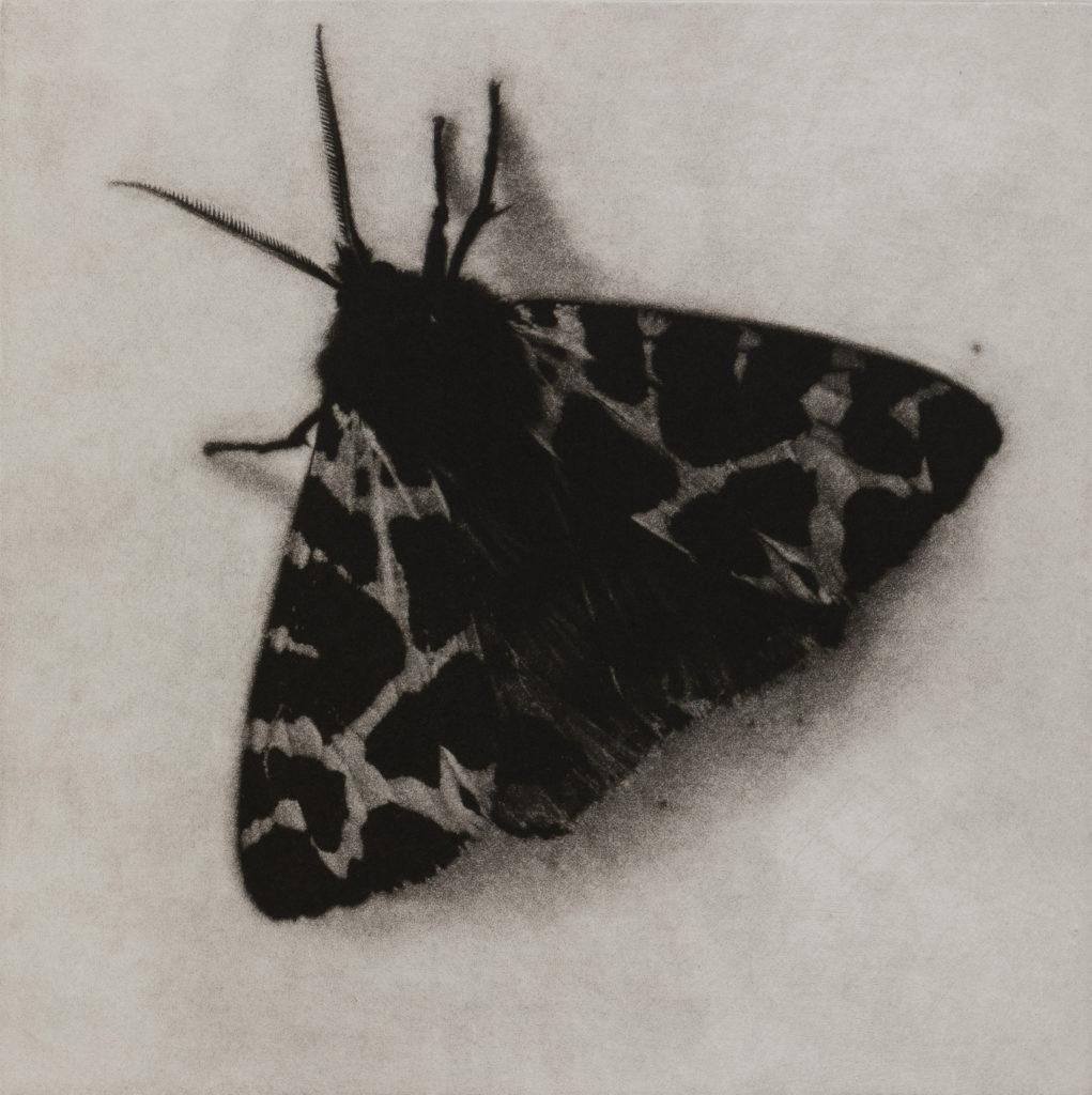 Sarah Gillespie Garden Tiger Moth