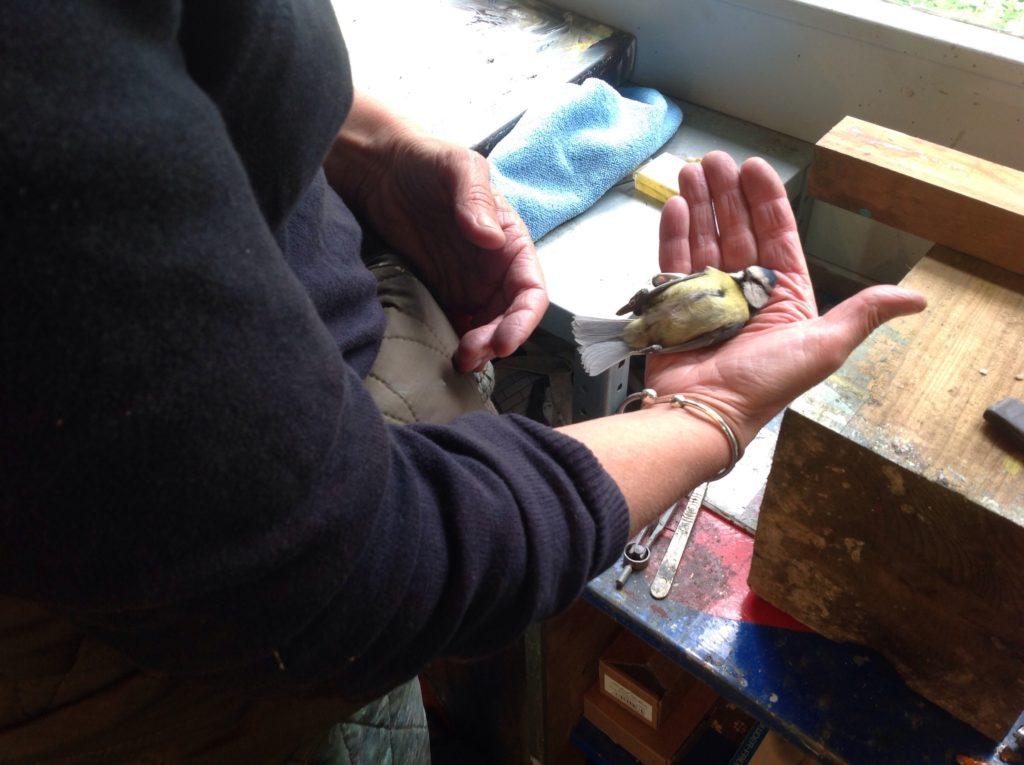Dead bird in Nesse Stonebridge Studio