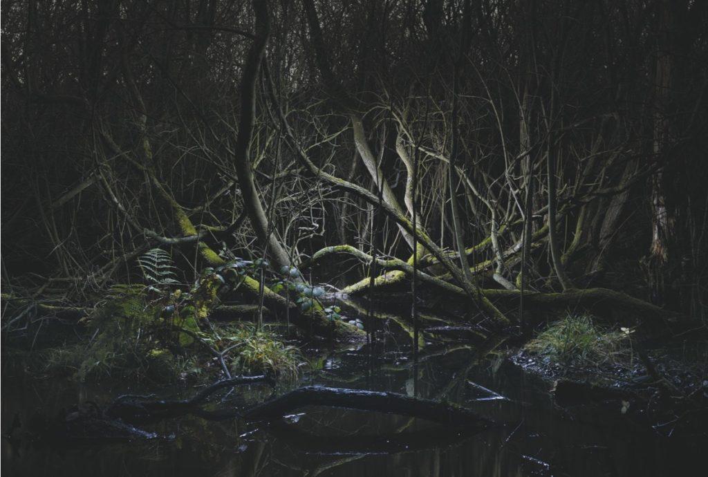 Tim Simmons Swamp #6