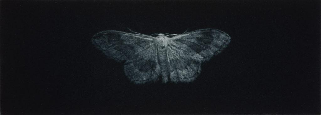 Sarah Gillespie Ribbandwave moth