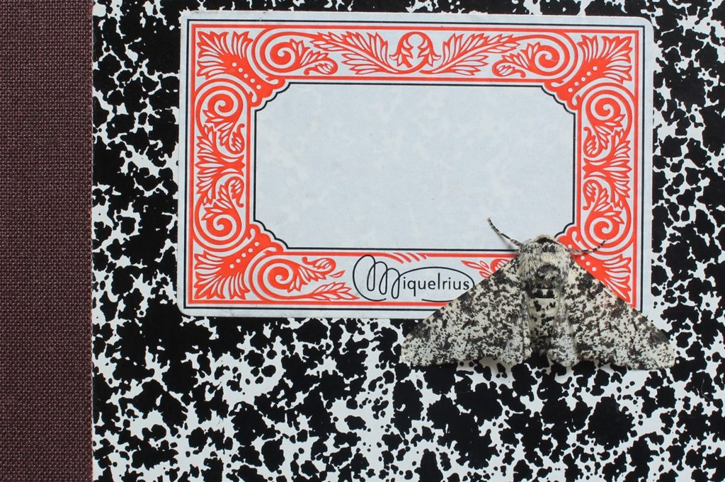 Bugs Beauty and Danger Alison Turnbull Peppered Moth