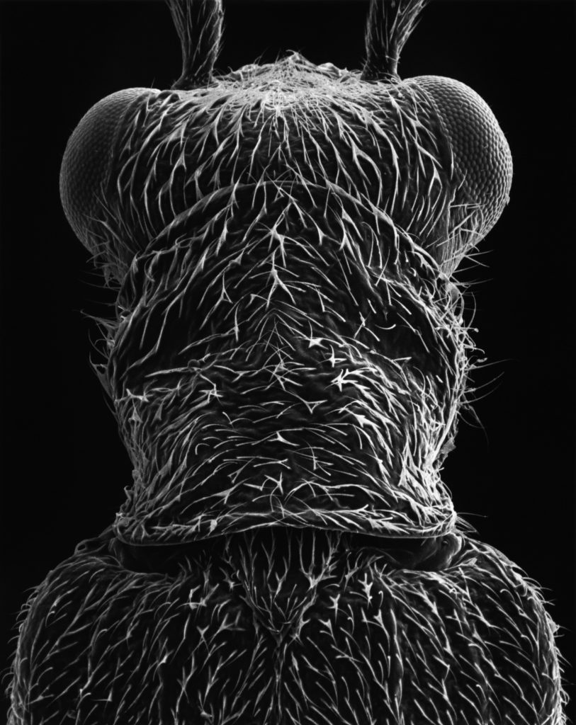 Bugs Beauty and Danger. Claudia Faehrenkemper, Imago 04, 60x magnification, 2004