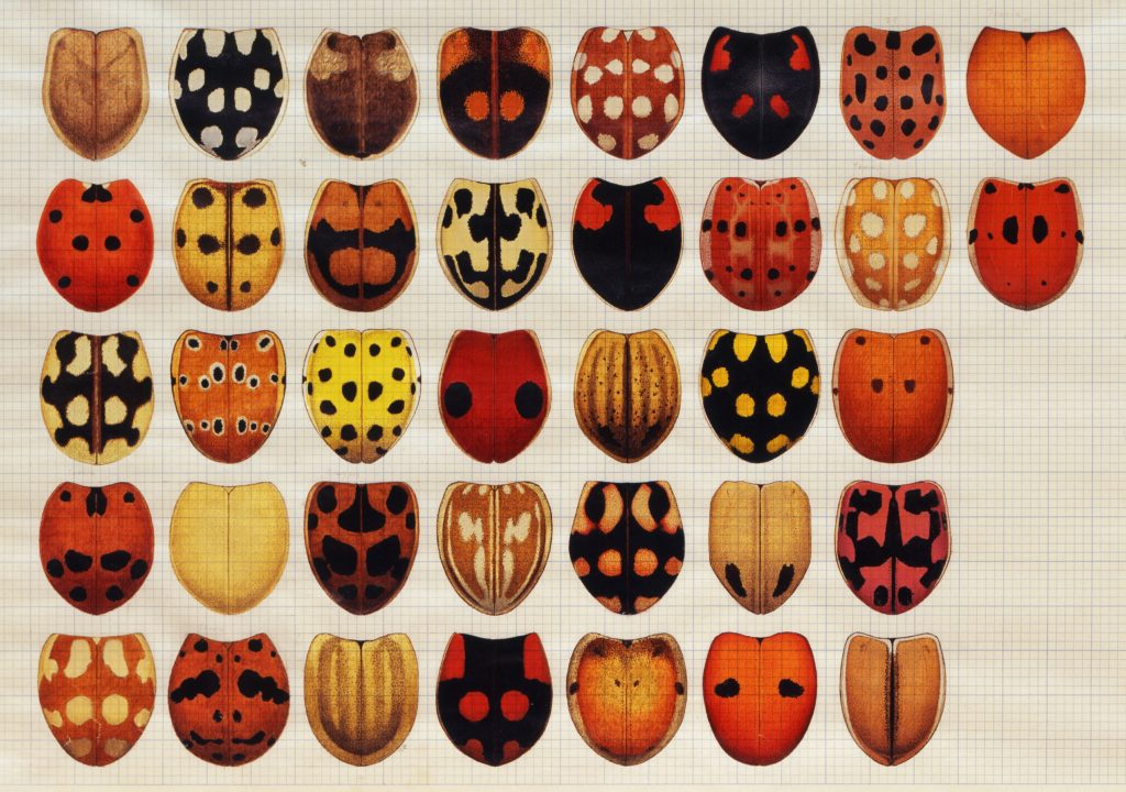 Lady bird beetles 1976