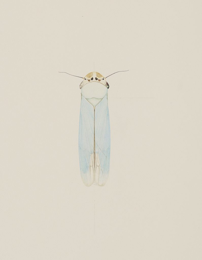 Cornelia Hesse-Honegger, Cicada from Fukushims