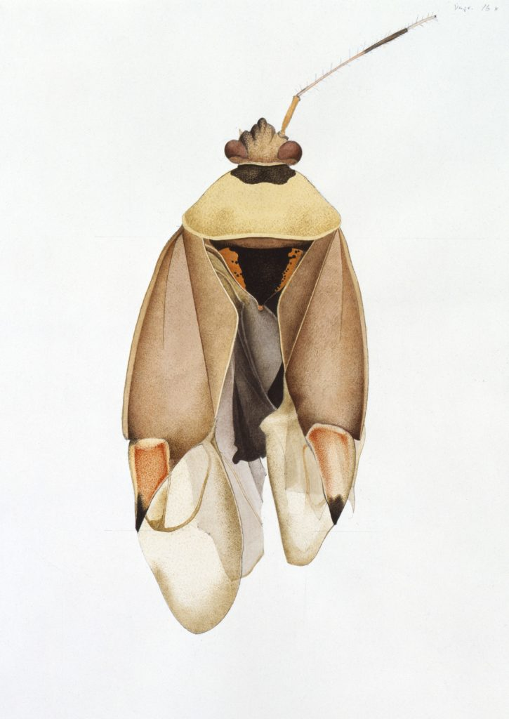Soft Bug, Gosgen, 1988