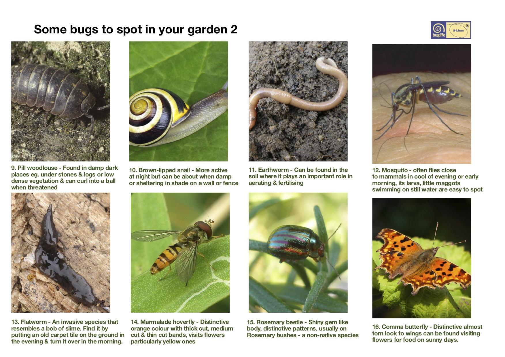 Find your local bugs: Bug poster page 2