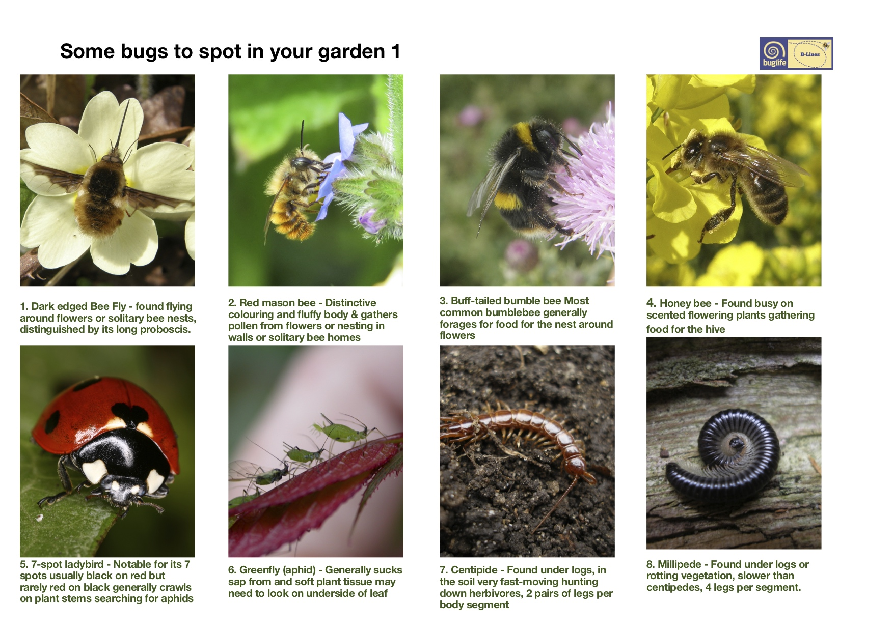 Find your local bugs: Bug poster oage 1