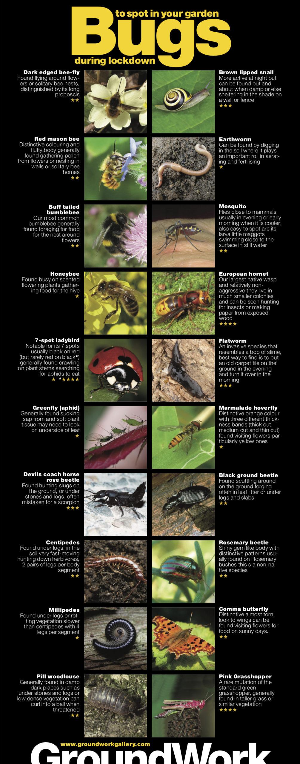 Pearce Marchbank Garden Bugs poster