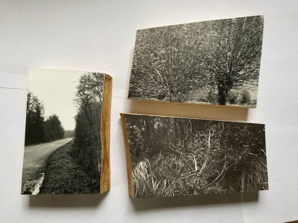 Lotte Scott Somerset willow 1,2,3