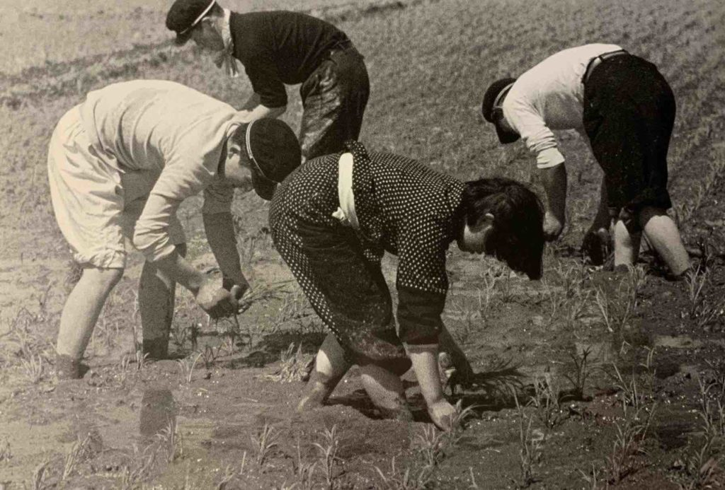 Boys and girls planting rice in Akita 1957