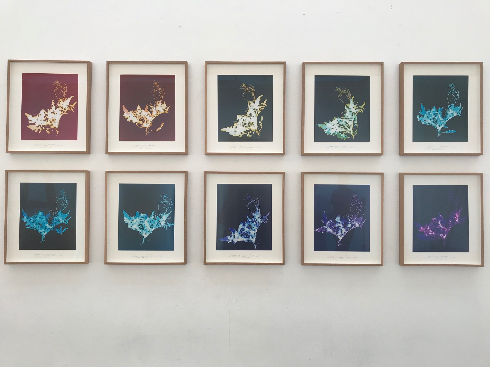 Chrystel Lebas London Rocket photograms
